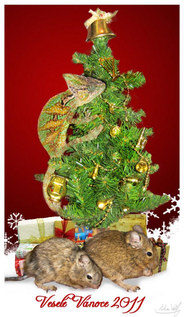 Přání k Vánocům 2011