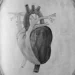 Srdce sketch